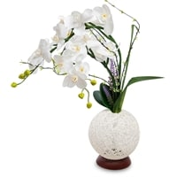 Орхидея с LED-подсветкой LP-14